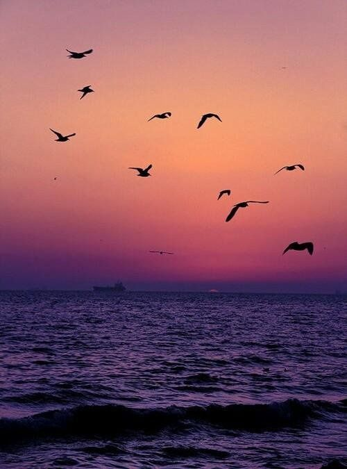 no how beautiful: D #travel #sea #landscape #birds #west