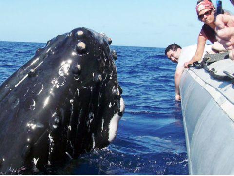 Dolphin & Whale Watching (Marine Life Tours), Oahu / Waikiki tours & activities, fun things to do in Oahu / Waikiki | HawaiiActivities.com