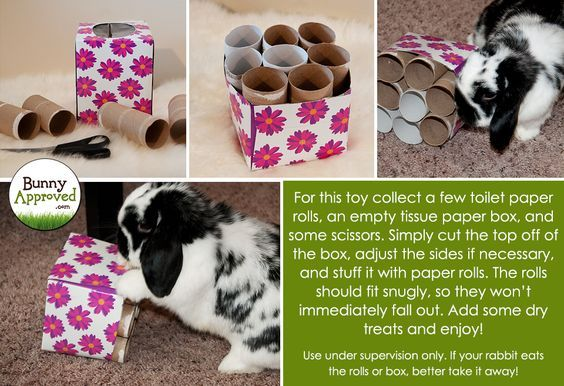 Fun DIY toy for rabbits made with toilet paper rolls and a tissue box.