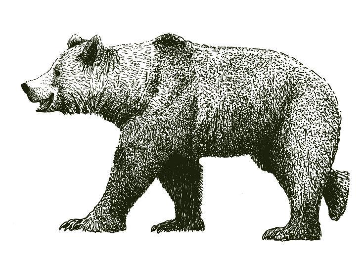 bear pen illustration