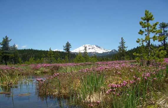 Hosmer Lake - Visit Bend, Sunriver, Redmond, Sisters | Central Oregon Tourism Information