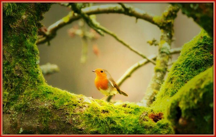 Γη και Ελευθερία.: Πουλί σε δέντρο αρχοντικό.