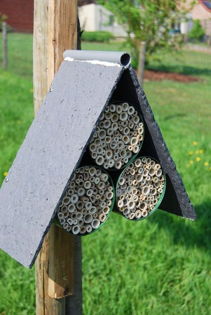 Homemade house for Mason Bees using tin cans and cane.  These bees help rid your garden of mites and pests