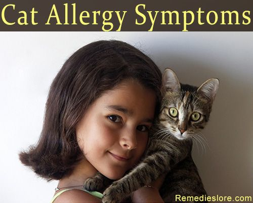 Cats are more commonly kept as pets in most of the houses. But for some people these cats can turn out to be allergic. Cat allergy is more common with people than dog allergy. http://allergy-symptoms.org/cat-allergy-symptoms/