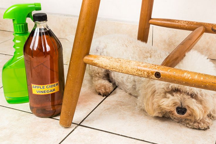 Products To Stop Dogs from Chewing Furniture | Cuteness.com