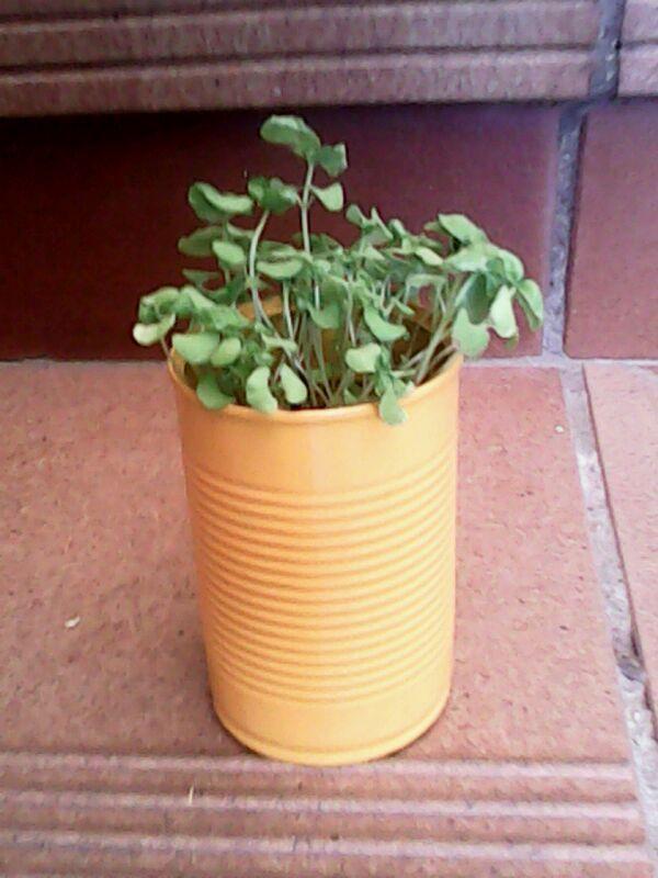 Lata-planta con albahaca