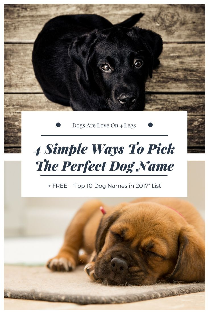4 Simple Ways To Pick The Perfect Dog Name