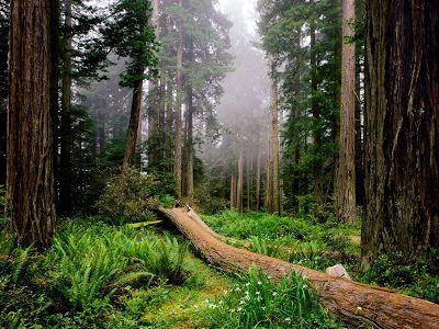 NorthAmericanForests