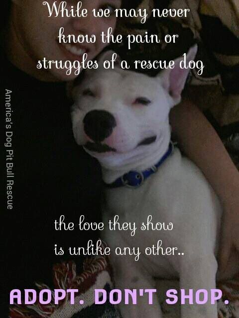 What can i do to make a difference in the lives of homeless dogs in my community?