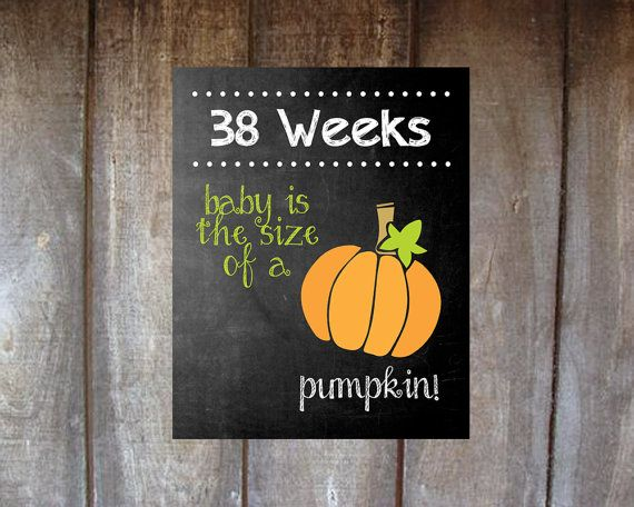 Maternity Week by Week Baby is the Size of a.... by TinyLittleDots, $10.00
