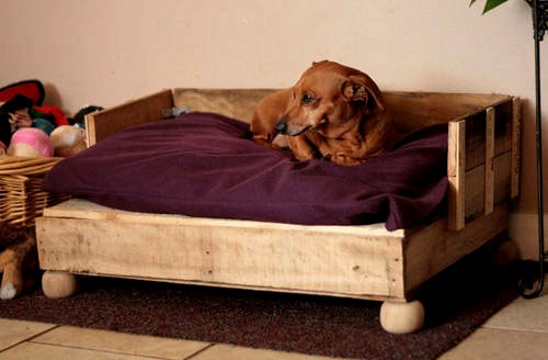 Wood Pallet Dog Bed... But painted a fun color!