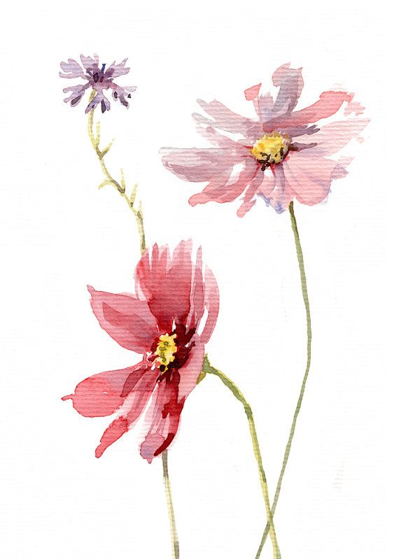 les 25 meilleures id es concernant fleurs cosmos sur pinterest fleurs sauvages photos de. Black Bedroom Furniture Sets. Home Design Ideas