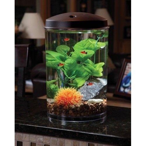 Best 25 3 Gallon Fish Tank Ideas On Pinterest 1 Gallon