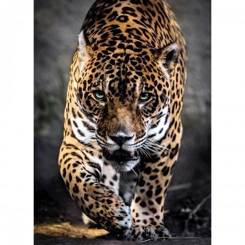 Clementoni - pz 1000 La marche du Jaguar - Castello | Jeux et Jouets