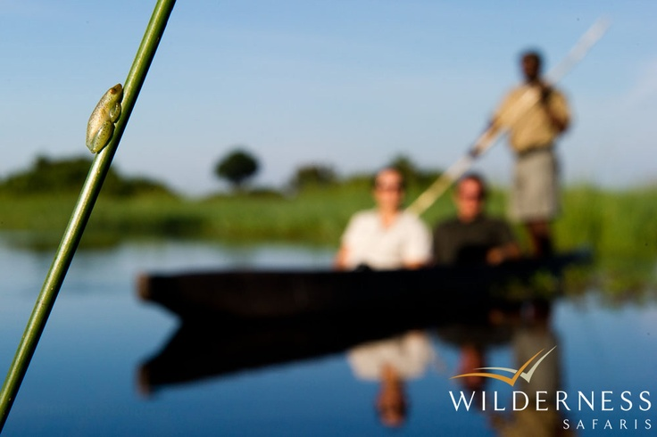 Jao Camp - The biodiversity of the Delta is incredible, and when one looks a little closer, another world is discovered! #Safari #Africa #Botswana #WildernessSafaris