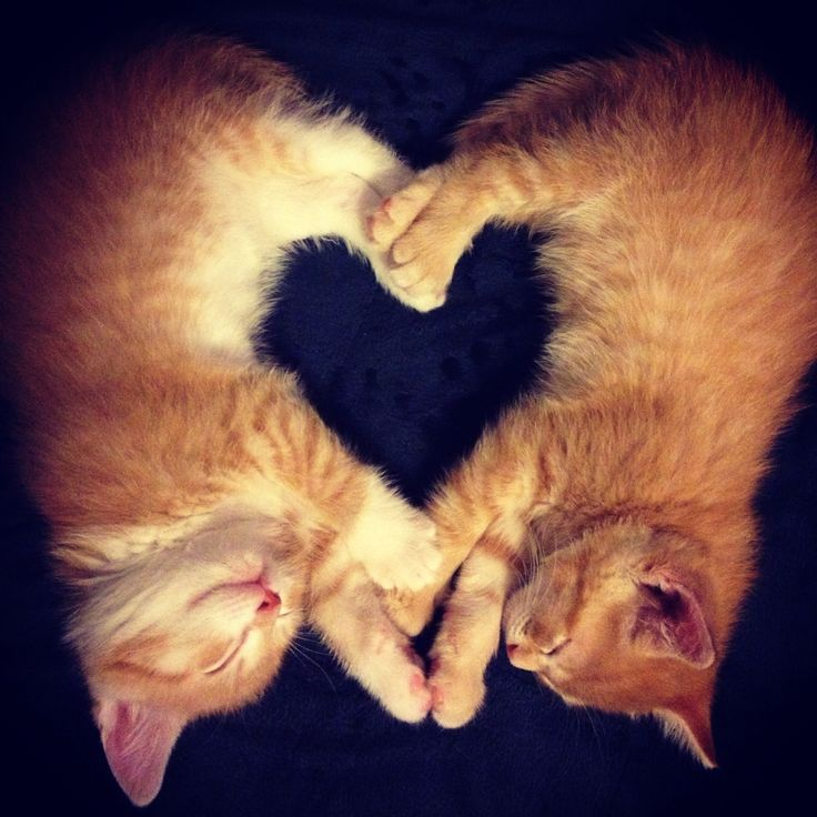 Heart kitties