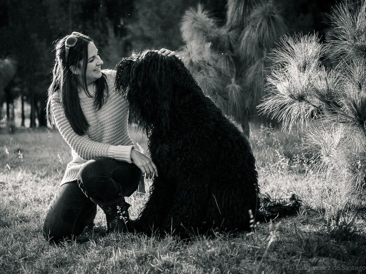 Terrier ruso negro  Black russian Terrier  Bogatyri  México
