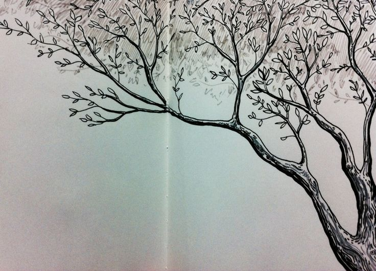 Tree by Diego Cáceres