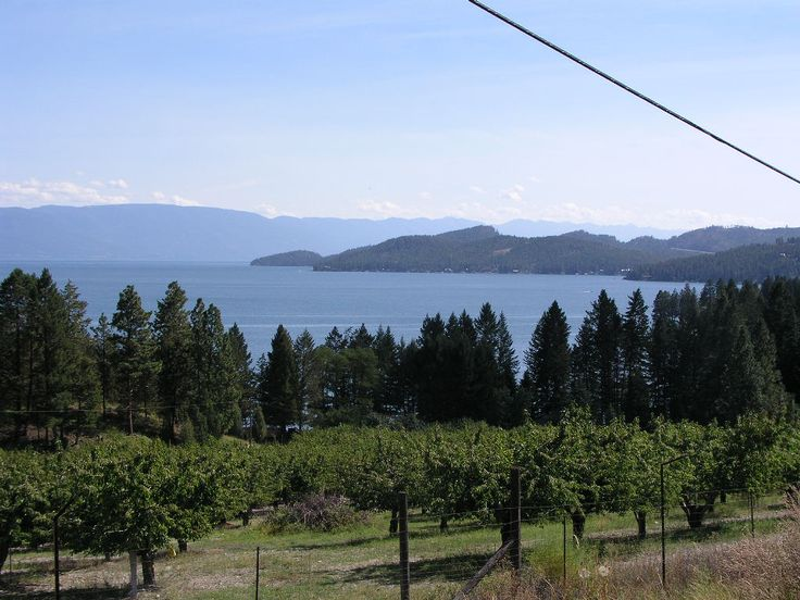 flat head lake cherry orchards~ My family used to go and pick cherries after the pickers had gone through.