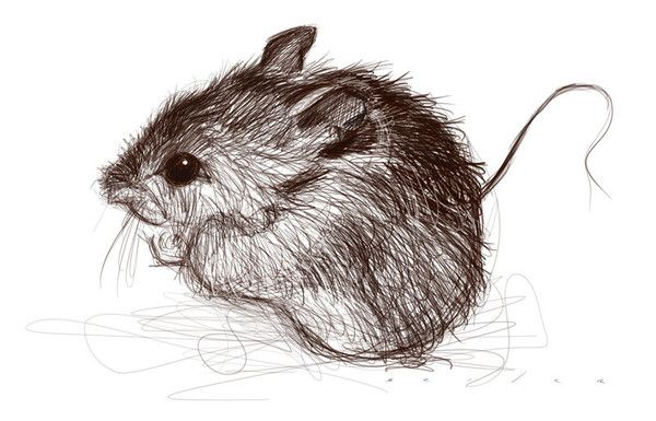little mouse beautiful sketch