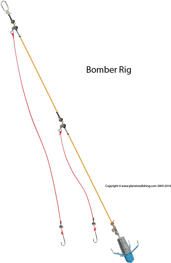 diagram    of the bomber rig   fishing   Sea fishing  Saltwater fishing  Fish