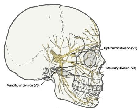35 best 삼차신경(trigeminal nerve) images on pinterest | cranial, Human Body