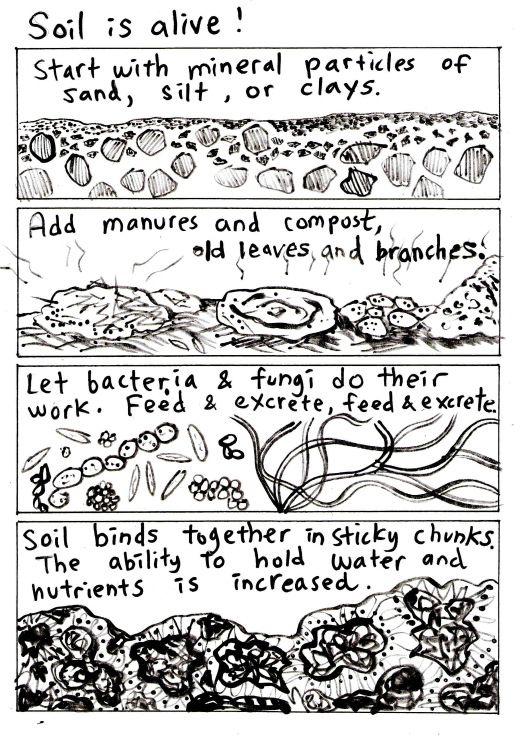 Soil is alive!