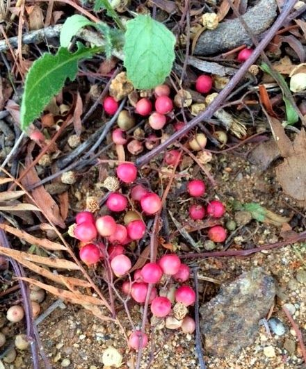 Hidden Allergens: Pink Pepperberries and Tree Nut Allergies IMPORTANT INFORMATION