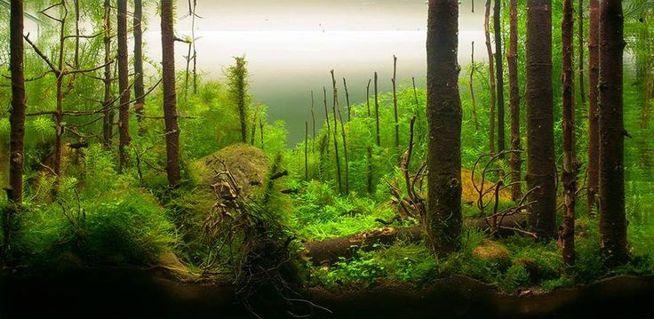 morning forest aquascape