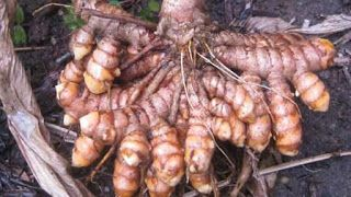 Ankh Rah's Healthy Living Guide: Shocking! Nobody Knew Eating Turmeric Daily Could ...