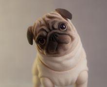 BJD Pets - Pug Dog