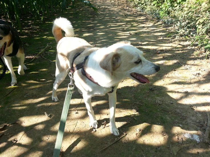 Lei si chiama Luna ed è una scricciolina di taglia piccola di circa 8 anni. Bravissima con le persone, preferiremmo per lei una situazione come unico cane di famiglia poiché l'abbandono l'ha molto provata e ha cambiato il suo rapporto con gli altri cani in peggio. Purtroppo per lei si trova in canile e cerca il contatto umano ogni volta che si passa davanti al suo box o la portiamo in passeggiata, attività che adora follemente. adozioni@milanozoofila.org o 3381929698