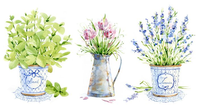 watercolor Herbs of Provence