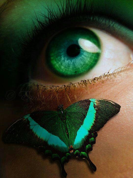 Green #butterfly green #eye