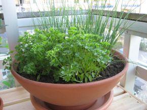 Plante ervas e temperos dentro de casa!