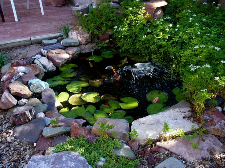 Small Pond Ideas Backyard full size of backyard48 small backyard pond ideas ideas for gardens in backyards small Small Koy Ponds Around The Edge In The Upper Right Is Water Celery With The White Madines Frills Pinterest Pond Landscaping Backyard Ponds And