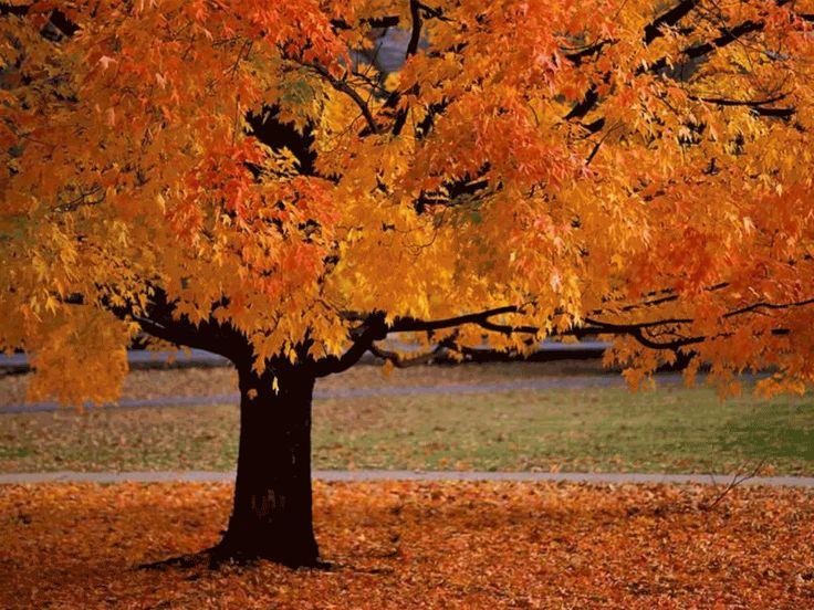 Гифки осень на рабочий стол