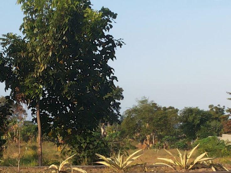 TANAH DIJUAL DI BY PASS NGURAH RAI, SANUR, BALI #2
