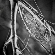 Spinnenausstellung im Museum Mensch und Natur