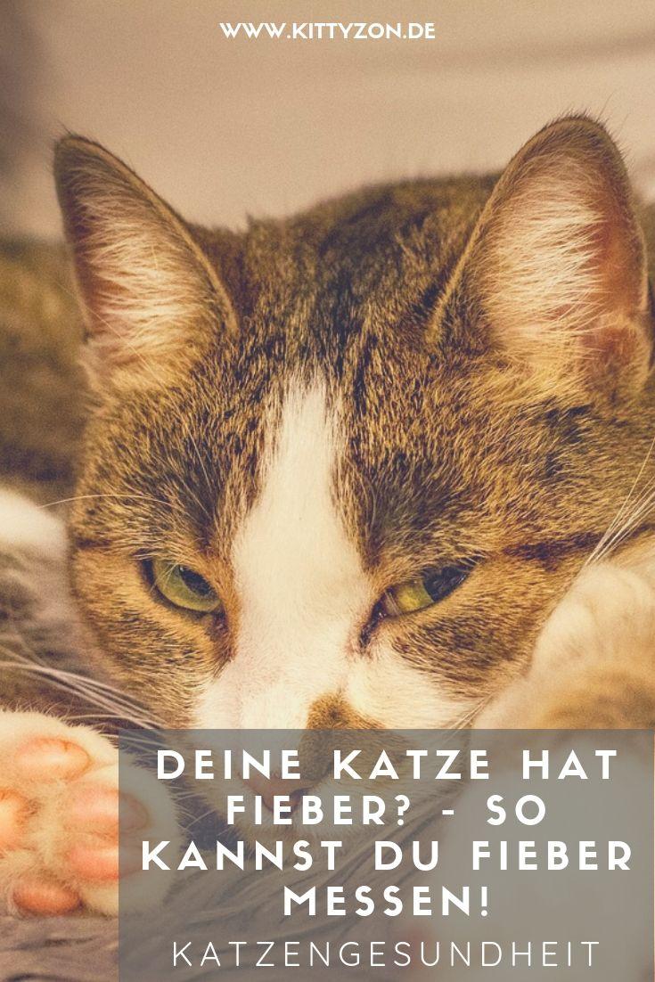 Deine Katze Hat Fieber So Kannst Du Fieber Messen Katzen