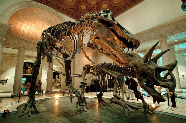 Natural History Museum Los Angeles, California