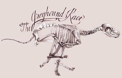 Squelette de lévrier en course - Greyhound race - Florence Gendre