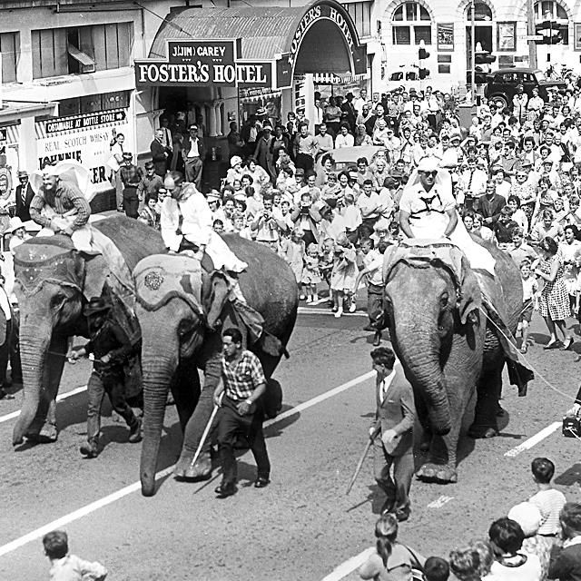 photo from 1963 when a visiting circus trumpeted their arrival by trotting three of them down the main street of Whanganui City. & My old pub right there √