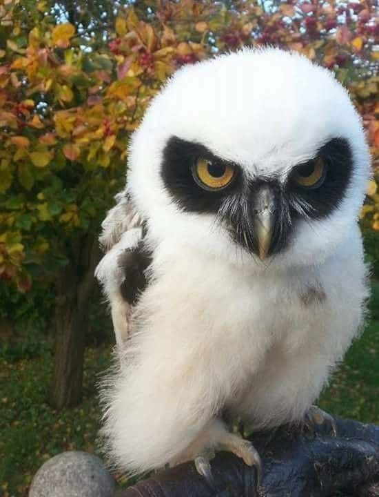 I never knew there were so many different kinds of owl...  AWESOME