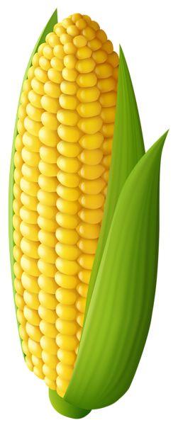 Corn Transparent PNG Clip Art Image