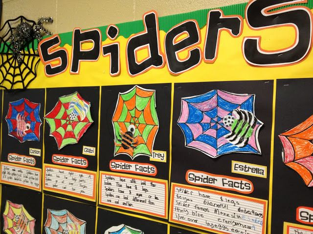 """I love these colorful """"Spider Facts"""" projects.  Ideal for Thanksgiving or to use with the book """"Charlotte's Web."""""""