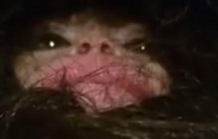 Russo diz ter capturado filhote do Abominável Homem das Neves