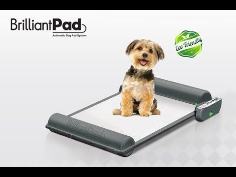 BrilliantPad: Self-Cleaning Indoor Dog Potty   Indiegogo