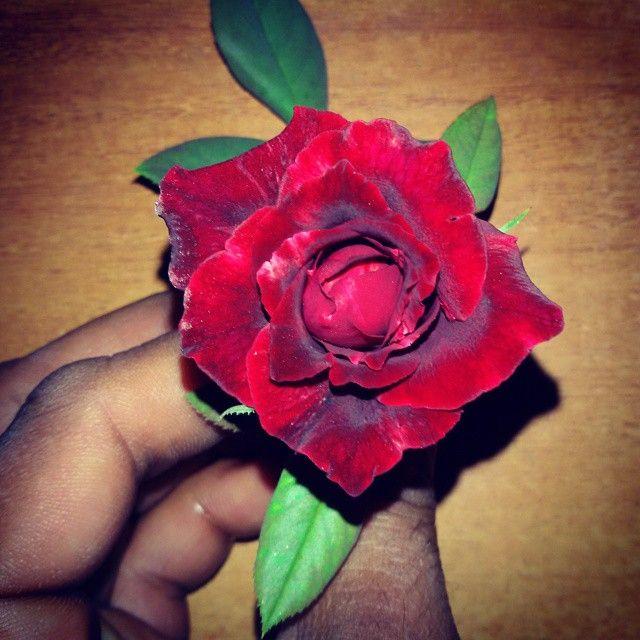 #flowers #flower #rose #TagsForLikes #petal #petals #nature #beautiful #love #pretty #plants #blossom #sopretty #summer #flowerstagram #flowersofinstagram #flowerstyles_gf #flowerslovers #flowerporn #botanical #floral #florals #insta_pick_blossom #flowerm