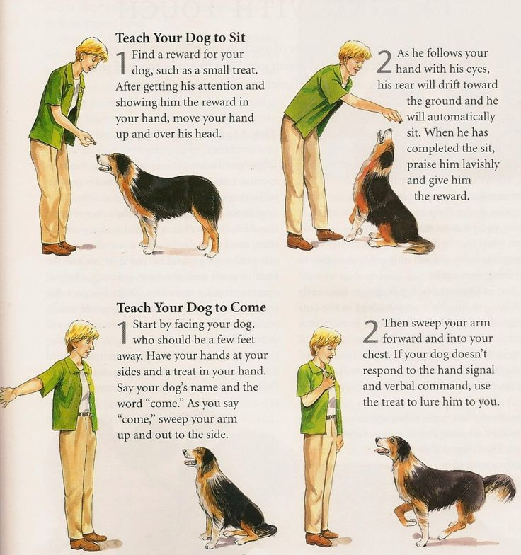 What dog training techniques proved efficient?What methods are the most  popular for training your puppy or dog?How to train your puppy.